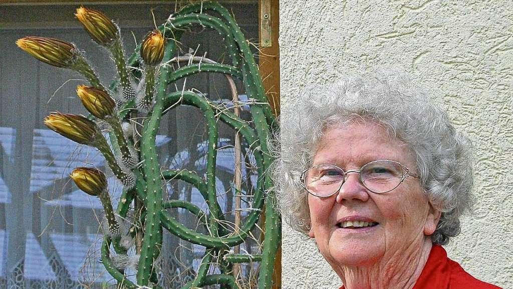 kaktus erfreut mit riesen bl te osterburg. Black Bedroom Furniture Sets. Home Design Ideas