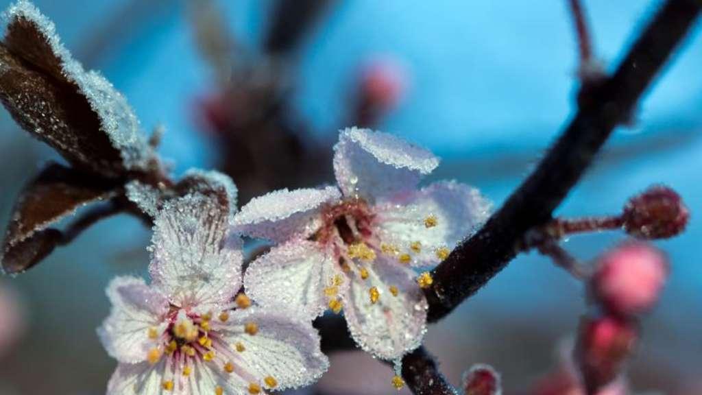 Der Garten Januar Was Tun Arbeiten ? Bitmoon.info Romantische Gartenmobel Korbstil