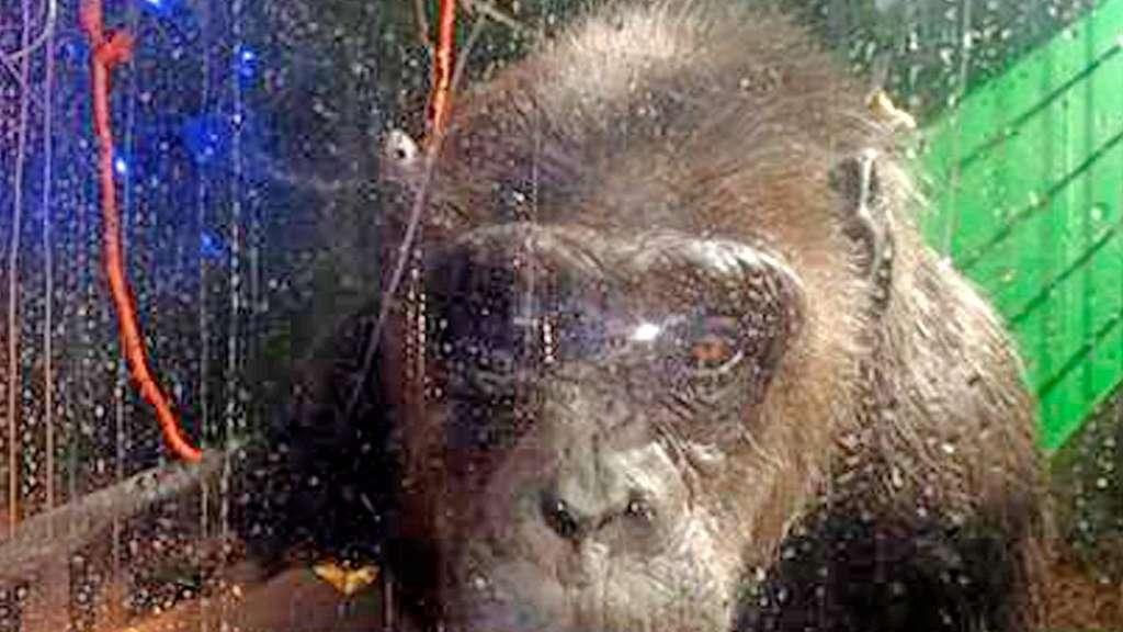 Tierrechtler Haben Circus Belly Im Visier Stendal