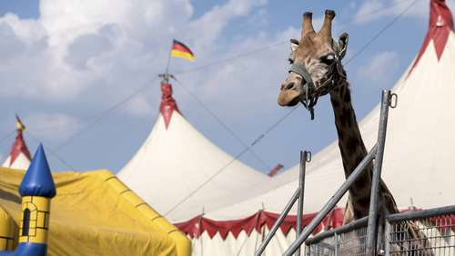 Heiligabend in der Manege: Familie will Stendaler Show zur Tradition machen
